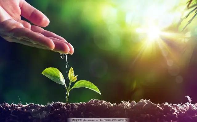 植树节|植一株绿色,溢一片春光