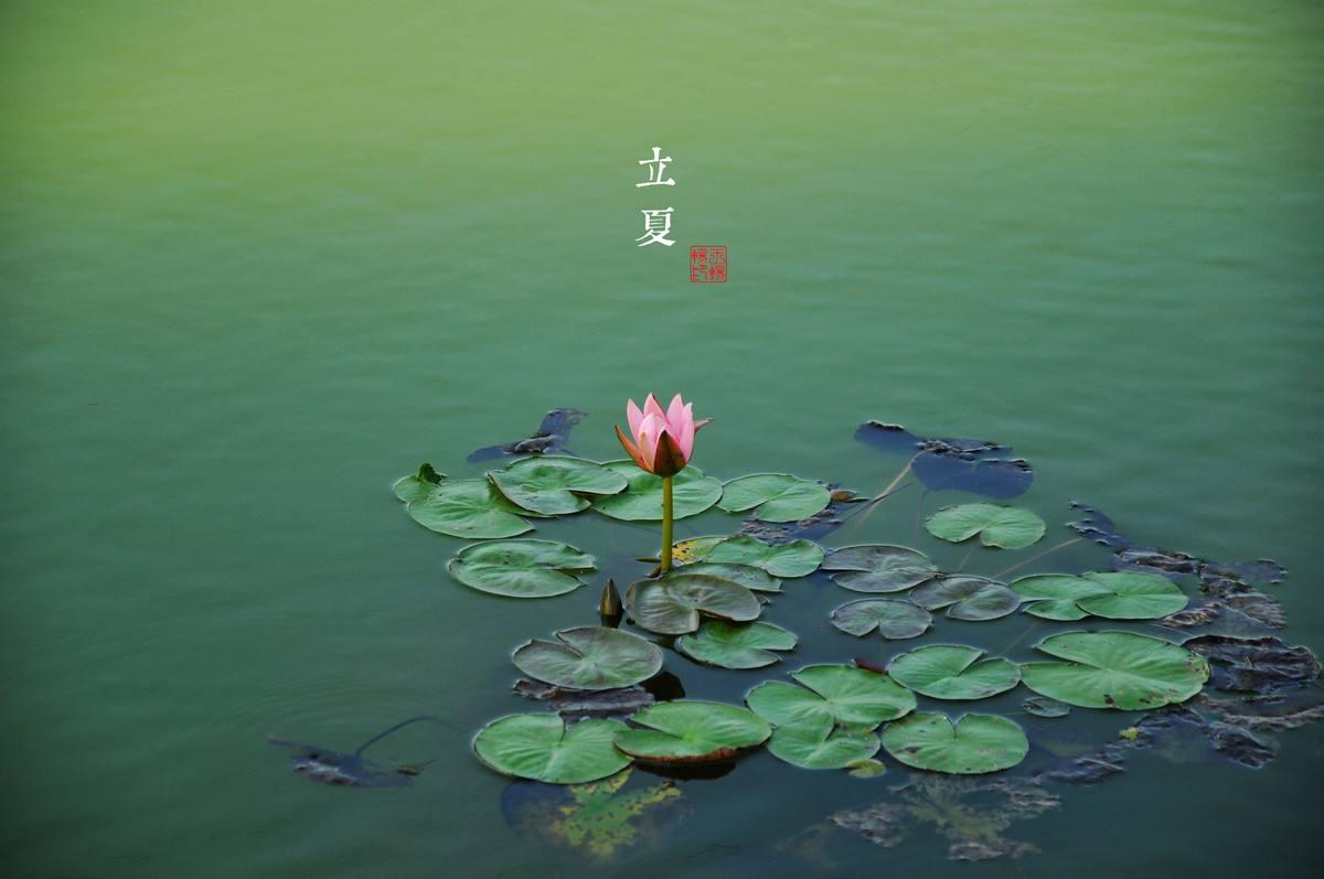 立夏 | 春意藏,夏初長